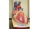 解剖学実習のイメージ写真