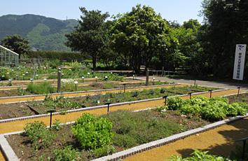 帝京大学薬用植物園