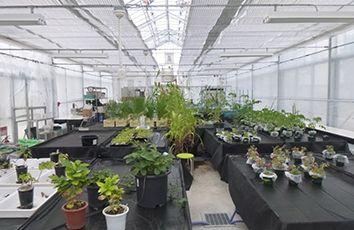 植物科学分野