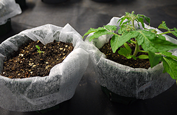 植物の環境応答、器官分化にかかわる植物ホルモンの機能解明