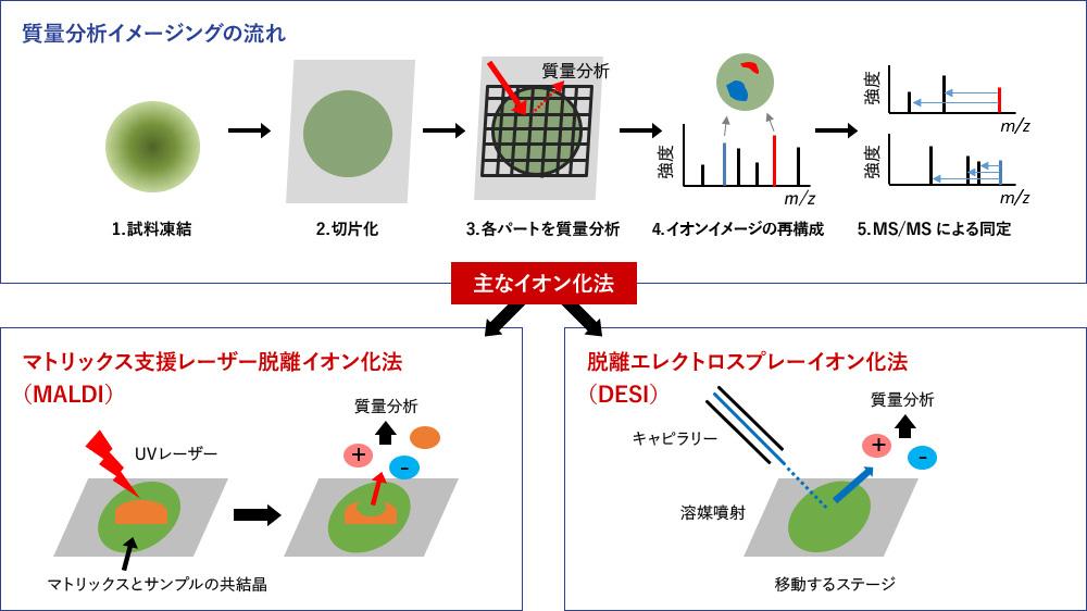 質量分析イメージングの流れ