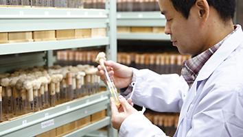 真菌症ならびに病原真菌の研究